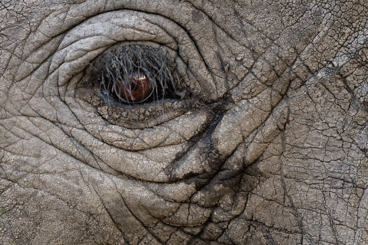 Close up of the eye of an African elephant