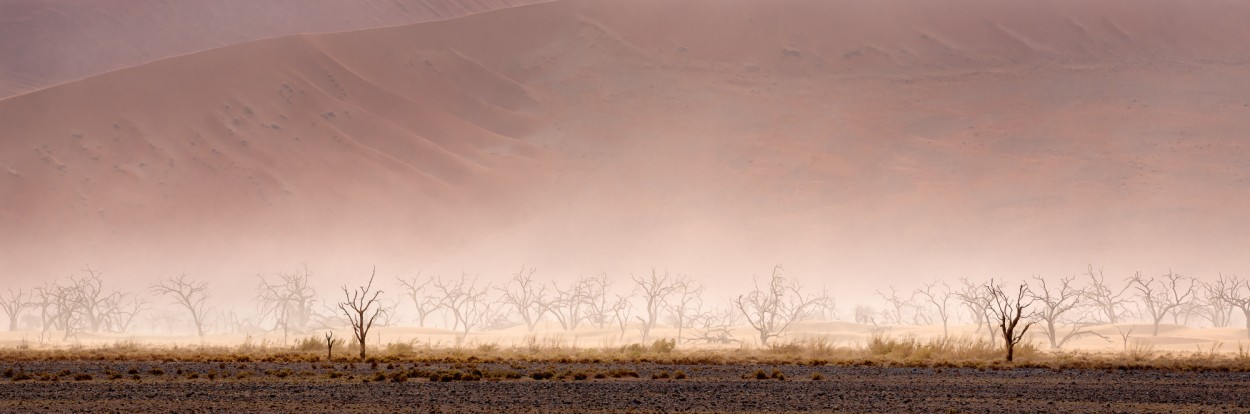 Dead tree's in the Namibian desert in a sandstorm - Sossusvei, Namibia