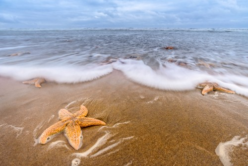 Starfishes on the beach in Katwijk